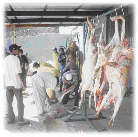 How To Do Qurbani http://www.jmco.org.za/qurbani.html
